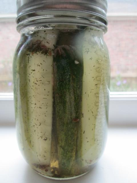 Refridgerator Dill Pickles