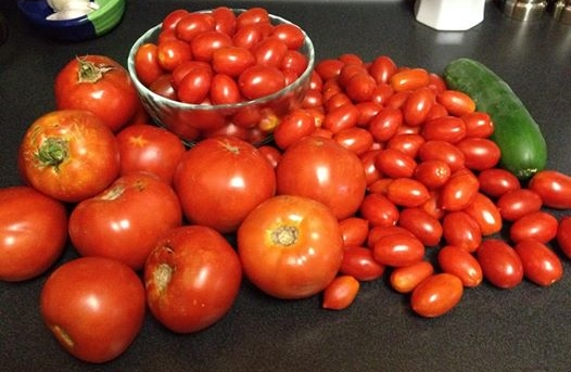 tomatoes (526x343)